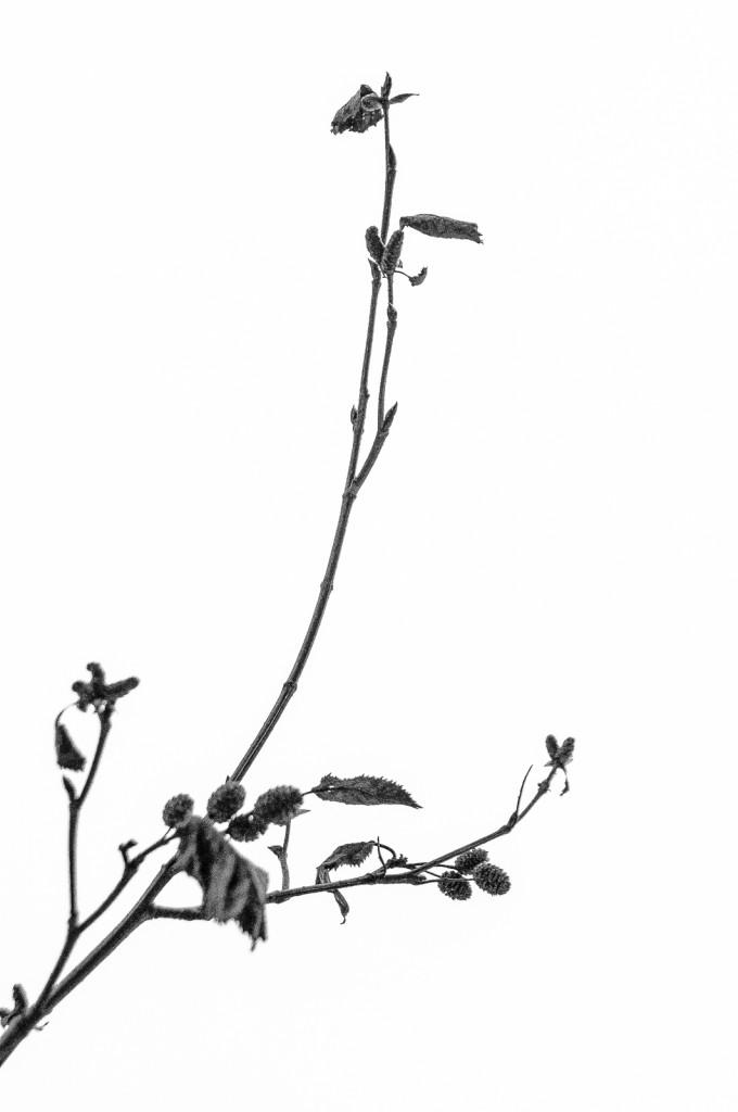Zen, Blatt, Zweig,
