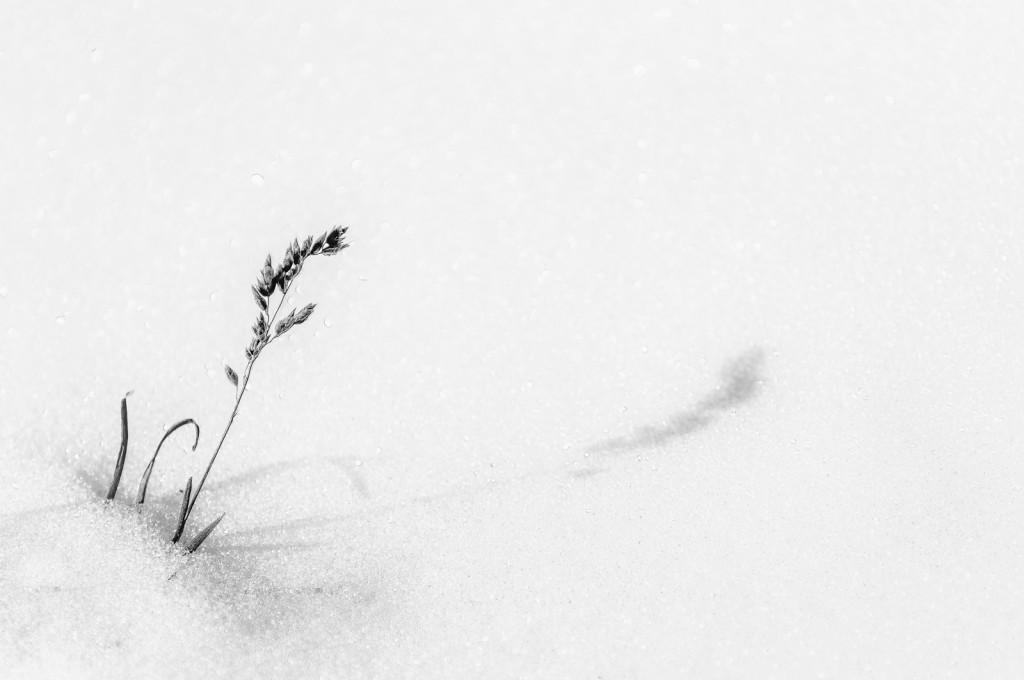 Gras, Schnee, Schatten, Zenfotografie