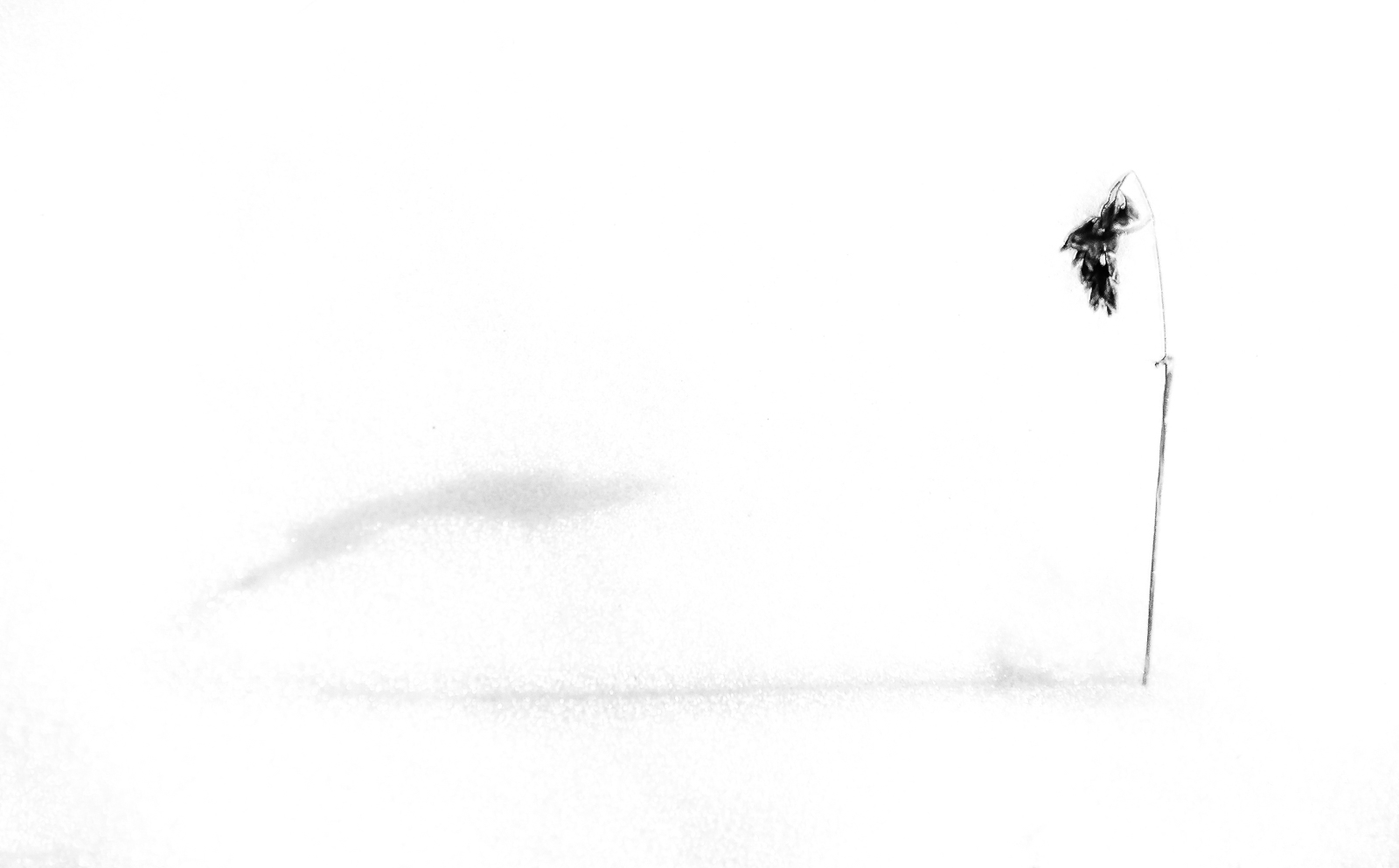 Gras, Schatten, Zen